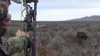 Archery Boar Hunt - 5 Pigs Down & Crazy Kill shots!