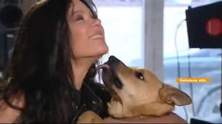 Искренняя дружба и любовь: какие собаки живут у звезд