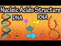 Structure Of Nucleic Acids - Structure Of DNA - Structure Of RNA - DNA Structure And RNA Structure