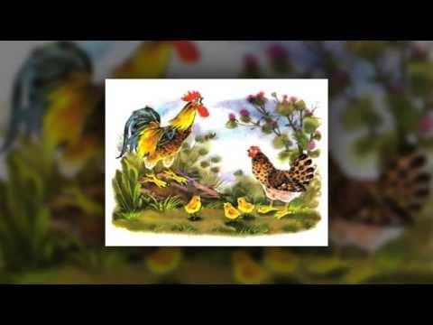 СЛУШАТЬ Детские сказки - Курочка и Петушок