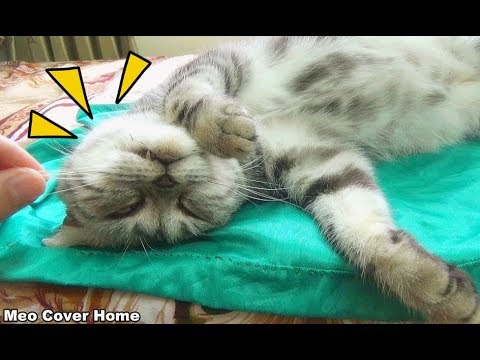 Troll Cat | Funny My Cats Whisker Being Pulled Out  [Funny Pets]