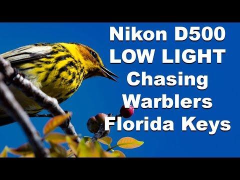 Chasing Warblers Spring Migration 2017 Florida Keys Nikon D500 Nikkor 200-500