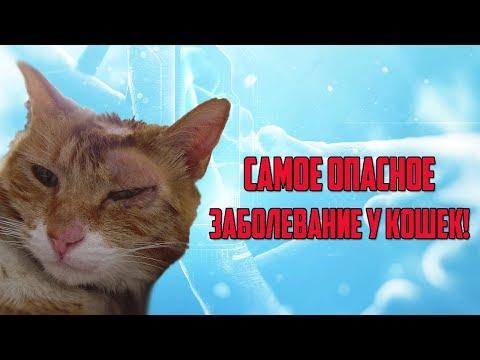 Лишай у кошек, как распознать и чем лечить?