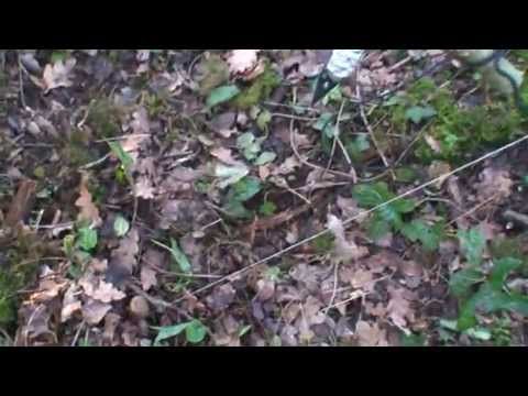Spear Trap With Esee Arrowhead Esee Trigger