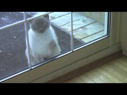 Knocking Cat