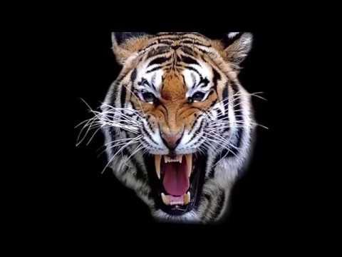 Most Amazing Wild Animal Attacks # 7 | Wildlife Animal Cruelty