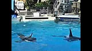 SHOW DAS BALEIAS ORCAS DO SEAWORLD - SAN DIEGO/USA