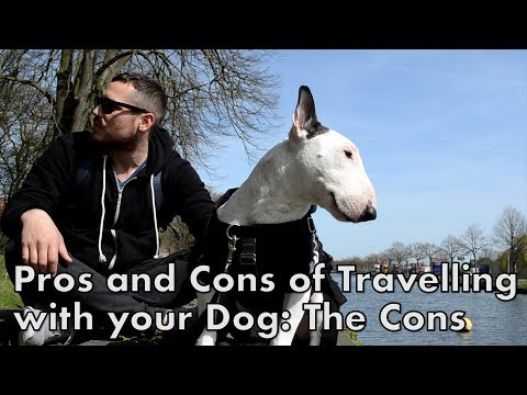 Pros and Cons of Traveling with your DOG: The CONS