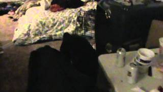 Training A Rottweiler To Get Along With Cats