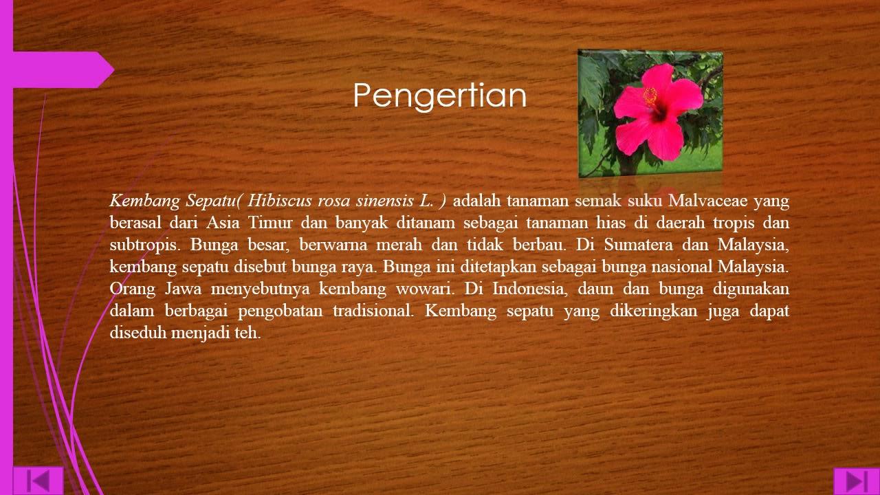Unduh 87 Gambar Bunga Raya Besar Gratis
