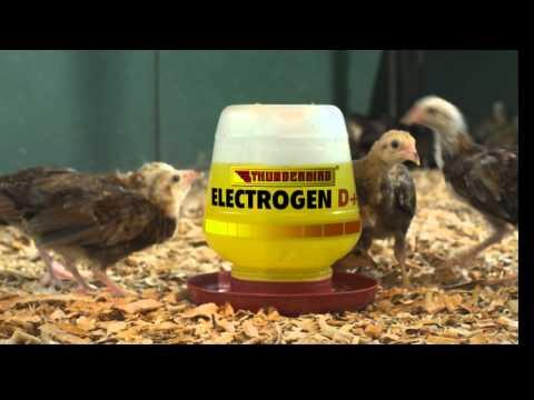 Electrogen D+ BULB