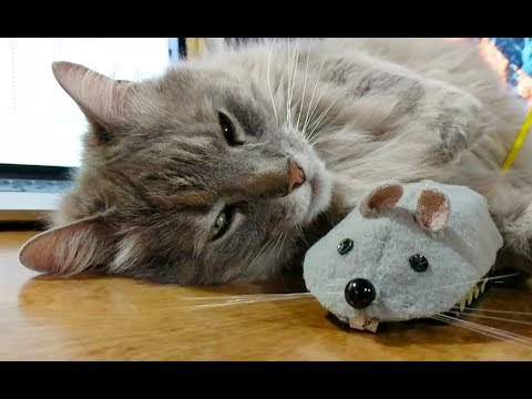 All she needed was a mouse buddy