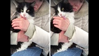 Cat Found in Snow is So Happy To be Saved She Can