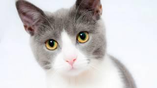 Как приучить уже взрослого кота к туалету?