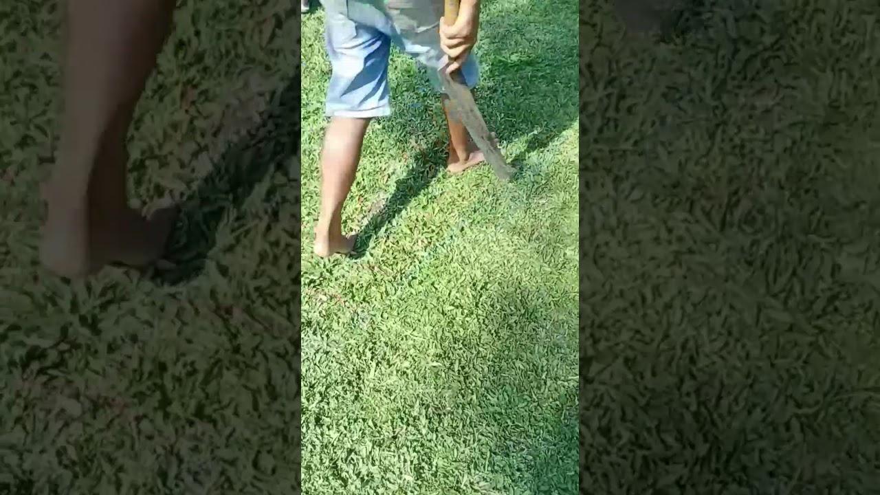 Penjual rumput taman nganjuk wa 085851472116 jual rumput ...