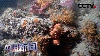 [中国新闻]《自然》刊文称2070年珊瑚礁或全部消失 | CCTV中文国际