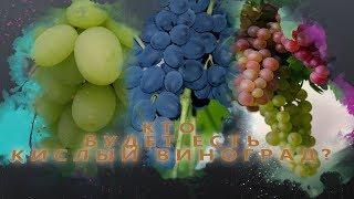 кто будет есть кислый виноград?