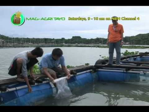 SEAFDEC-AQD: Thematic Program 1 - Meeting Social & Economic Challenges in Aquaculture Part 2