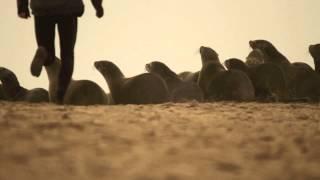 Donkey bay | Africa GOING LEFT