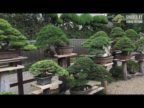 Khu vườn của bậc thầy Bonsai : Masahiko Kimura master