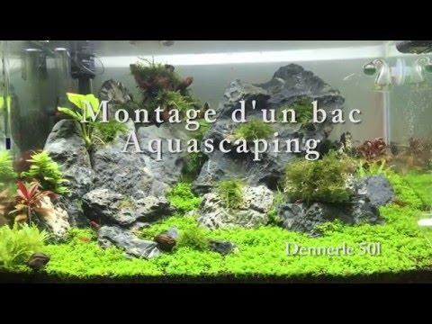 Aquarium aquascaping dennerle 50l step by step evolution for Aquarium 50l