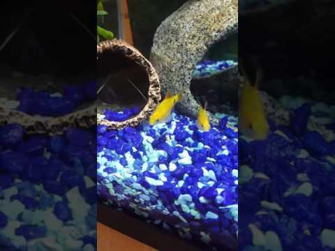 My Pet Yabbie/ Crayfish Tank Setup Tips