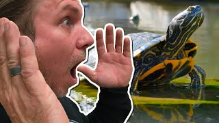 building-an-insane-turtle-pond-for-my-reptile-zoo-brian-barczyk