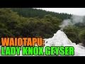 Lady Knox Geyser - Waiotapu Thermal Wonderland - Rotorua, New Zealand