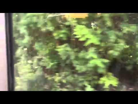 Ocho Rios Excursion Bob Marley Home