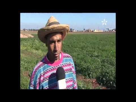 روبرتاج : الإعتماد على المياه الجوفية لزراعة الحبوب في ظل غياب الأمطار.