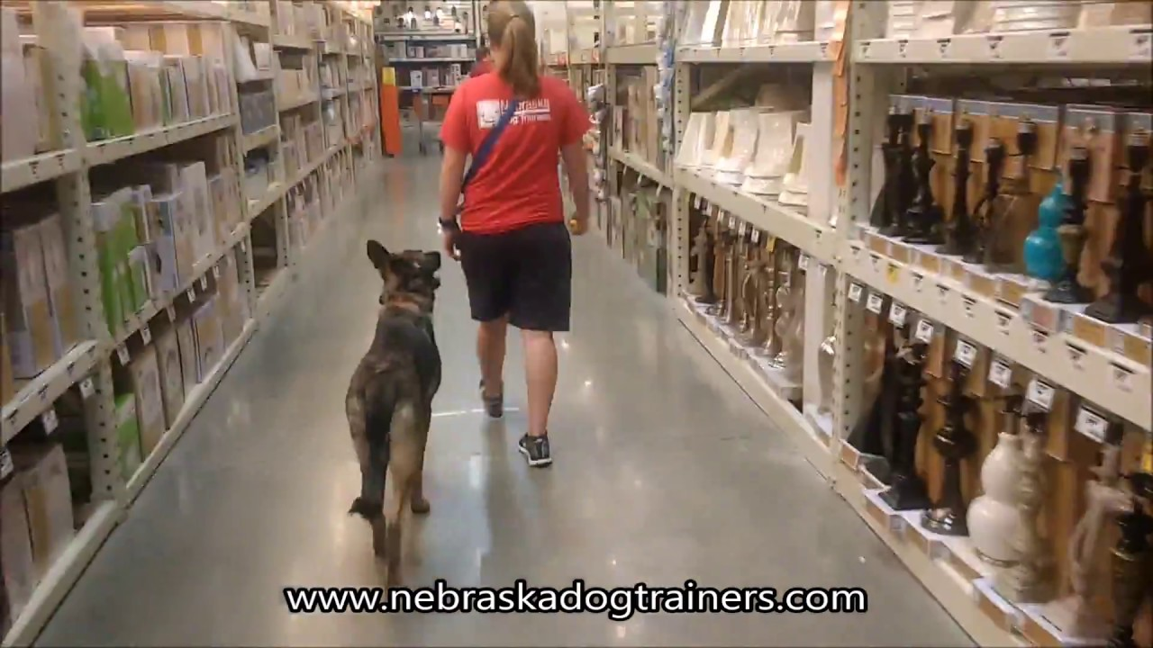 Therapy Dog Training Omaha
