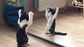 Kitten Sees His First Mirror