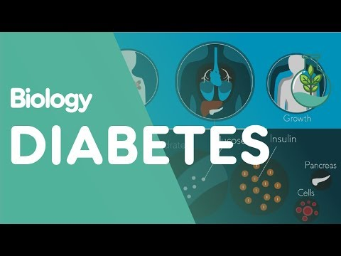 What is Diabetes? | Biology for All | FuseSchool