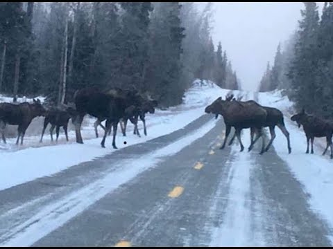 Running errands in Fairbanks Alaska on New years day