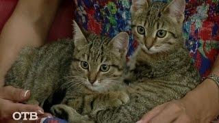 Знакомство с питомцами: котята Анита и Бонита ищут хозяев