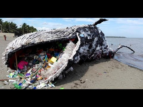 Greenpeace Philippines - Dead Whale