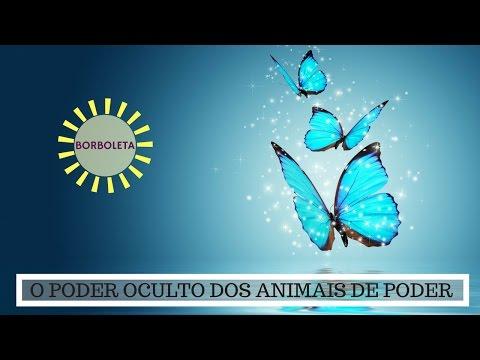 Significado da Borboleta - O Poder Oculto do Animal de Poder!