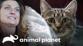 ¡Una colonia de gatos salvajes! | Mi gato endemoniado | Animal Planet