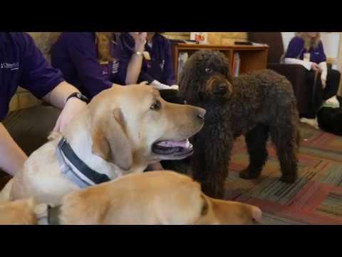 Healthy Me PA: Pet Friend Program