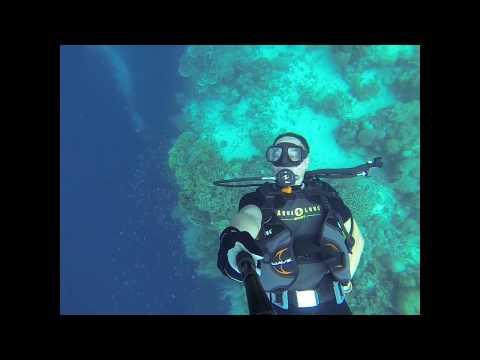 Bohol Island Reef Dive