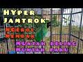 Cucak Ijo Nembak Isian Kasar Ngentrok Full Isian Ngeroll Nembak Muntah Beling Muntah Paku  Mp3 - Mp4 Download