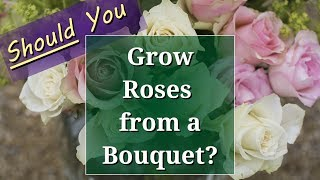 Should you Grow Roses from a Bouquet?
