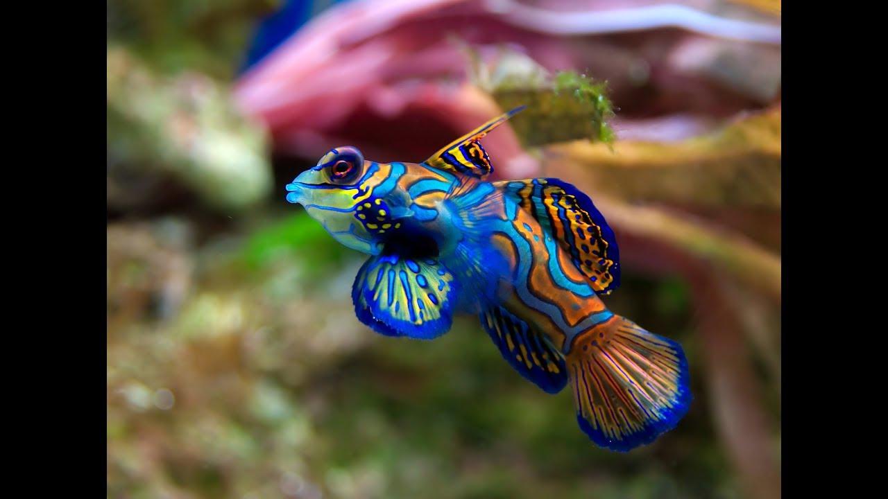 Top 5 saltwater nano fish 4k youtube for Nano saltwater fish