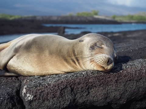 Renewable energy in Ecuador and the Galapagos Islands