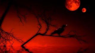 dark-ritual-ambient-(dark38-life of a dead crow)