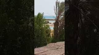 كندة علوش تنشر فيديو مباشر من الجونة لدحض شائعة القبض عليها وزوجها