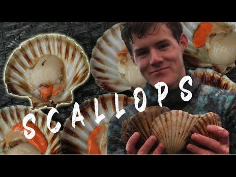 Scallops Catch & Cook NZ