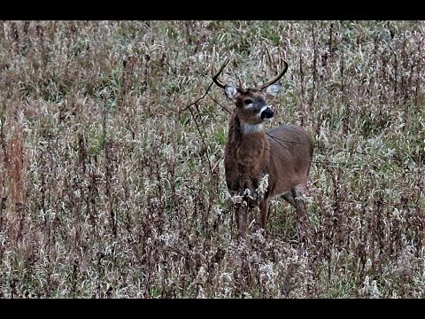 Hunting Bucks During The Rut In Illinois - Brown County - 2018