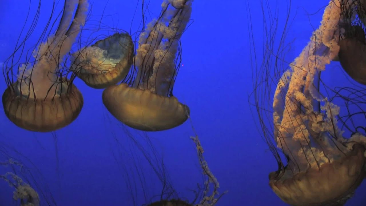 Some Amazing Jellyfish Facts Pottery Barn Kids Youtube