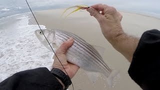 Beach Striped Bass Surf Fly Fishing & CHICKEN SCRATCH Deceiver